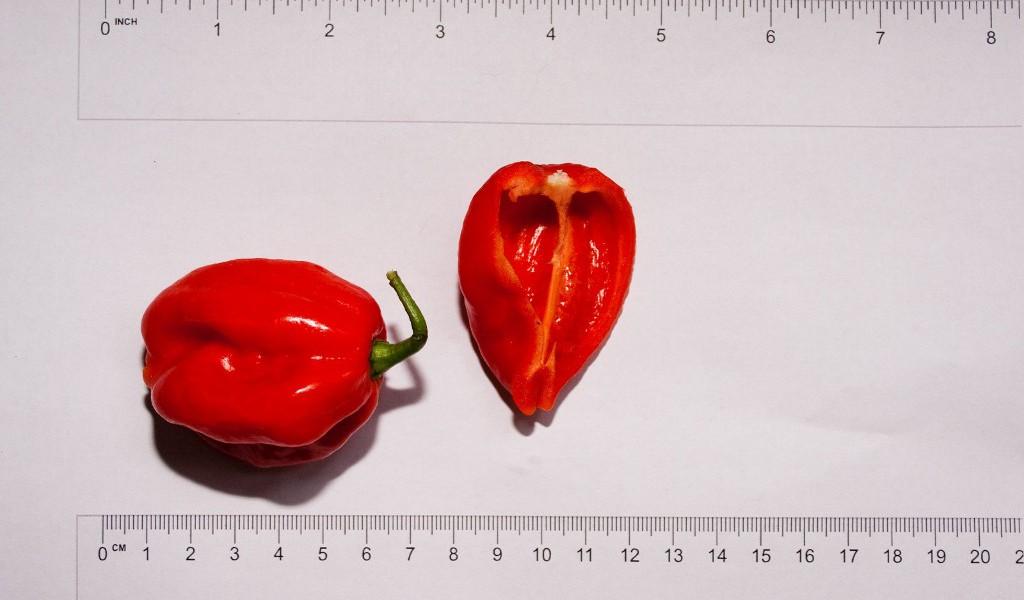 habanero-red-1